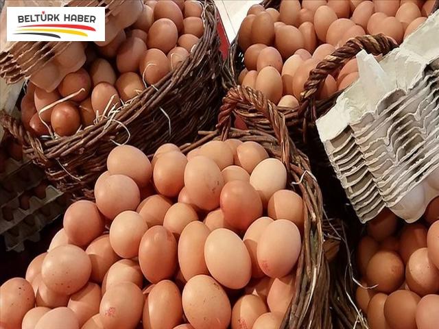 Yumurtada dioksin skandalı