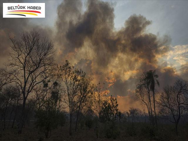 Amazon ormanlarının tahrip edilmesi Brüksel'de protesto edildi