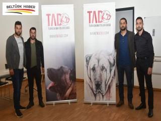 Türk Çoban Köpekleri Belçika'da tanıtıldı