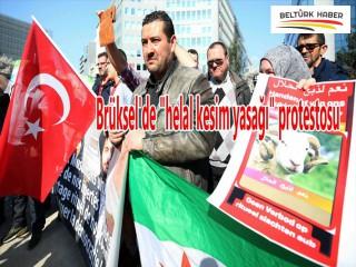 BRÜKSEL'DE HELÂL KESİM YASAĞI PROTESTOSU